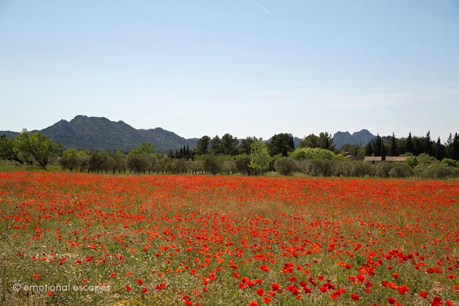 Alpilles  Provence rentals