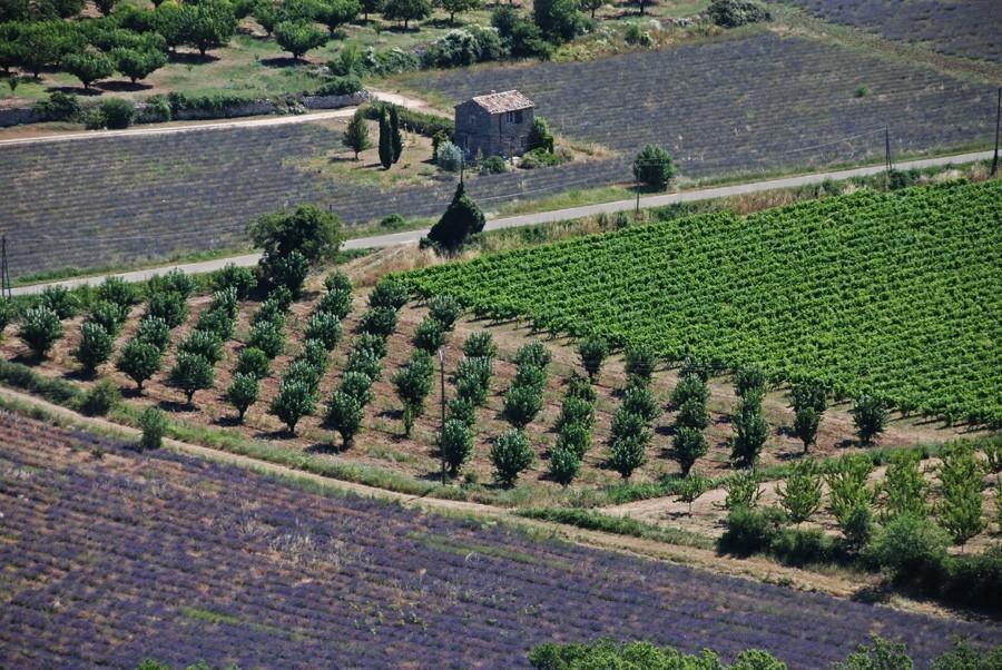 Luberon  Provence rentals